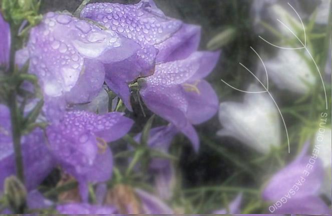 Les journ e des plantes de chantilly 2016 studio verde e paesaggio - Journee des plantes chantilly ...